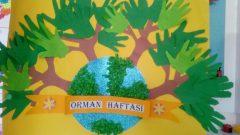Orman Candır